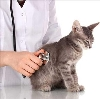 Ветеринарные клиники в Новой Малыкле